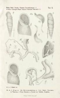 Prace Zoologiczne Polskiego Państwowego Muzeum Przyrodniczego. Tablica II / A. J. Wagner