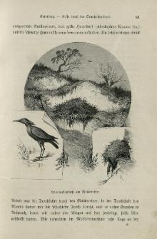 Von der Capstadt ins Land der Maschukulumbe : Reisen im südlichen Afrika in den Jahren 1883-1887. Bd. 1