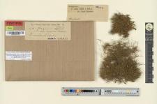 Pterogonium gracile var. capense Rehm.