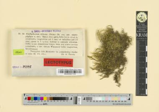 Brachythecium albicans (Necker) Br. eur. var. macrophyllum