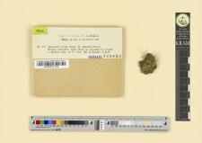 Buxbaumia viridis Bridel