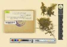 Rhytidiadelphus triquetrus (L.) Warnstorf