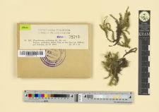 Plagiothecium undulatum (L.) Br. eur.