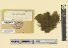 Rhacomitrium canescens (Timm.) Bridel