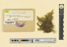Hypnum Schreberi Willdenow