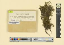 Antitrichia curtipendula (L.) Bridel var. falcata Podpera
