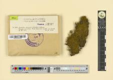 Anomodon attenuatus (Schreber) Hübener