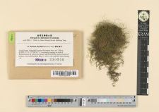Barbella flagellifera (Card.) Nog.