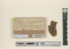 Encalypta ciliata Hedw.