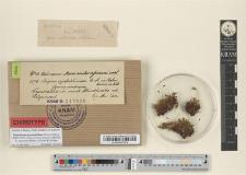 Bryum syntrichoides C. M. fo. umbrosa