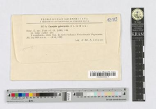 Erysiphe galeospsidis