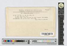Phyllactinia guttata (Fr.) I. Lèv.