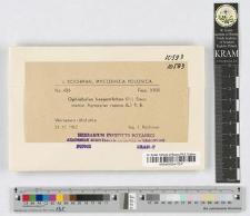 Ophiobolus herpotrichus (Fr.) Sacc.