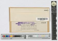 Naevia tithymalina (Kunze) Rehm