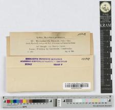 Mycosphaerella Himantia (Pers.) Died.