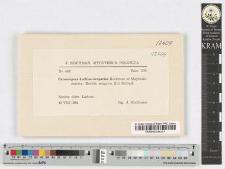 Peronospora kochiae-scopariae Kochman et Majewski
