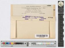 Plectophoma bacteriosperma (Pass.) v. Höhn.