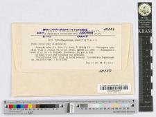 Cylindrosporium ulmi (Fr.) Vassil.