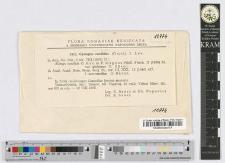 Cystopus candidus (Gmel.) I. Lév. var. var. globosus O. Săvul. fo. f. intermedius O. Săvul.