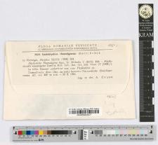 Coniothyrium rhamnigenum (Sacc.) Bubák