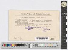 Graphium pallescens (Fuck.) P. Magnus