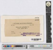 Melanconis carthusiana Tul.