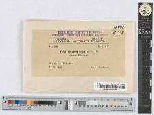 Valsa ambiens (Pers. ex Fr.) Fr.