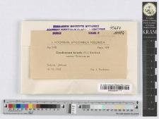 Caudospora taleola (Fr.) Starbäck