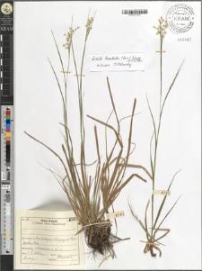 Luzula luzuloides (Lam.) Dandy & Wilmott