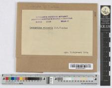 Cronartium ribicola Dietz. n. i t. sp.