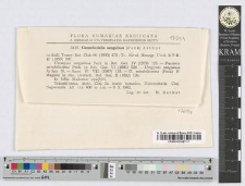 Cumminsiella sanguinea (Peck) Arthur