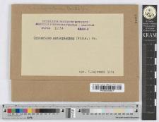 Cronartium flaccidum (Alb. et Schw.) Winter