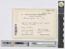Puccinia epilobii DC.