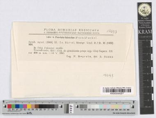 Puccinia falcariae (Pers.) Fuckel