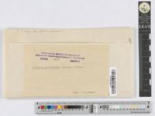 Puccinia Phragmitis (Schum.) Koern.