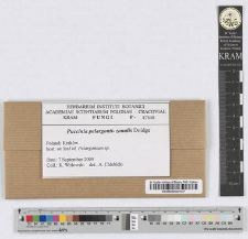 Puccinia pelargonii-zonalis Doidge