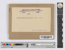 Phragmidium Potentillae /Pers./ Wint