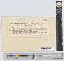 Triphragmiopsis isopyri (Moug. et Nestl.) Tranzschel