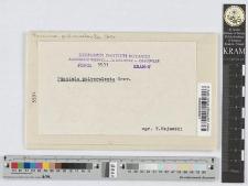 Puccinia Epilobii-tetragoni