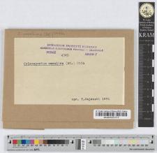 Coleosporium cacaliae /DC./ Wagn.