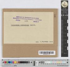 Chrysomyxa Pirolae /DC./ Rostr.