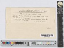 Gymosporangium confusum Plowr.