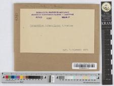 Phragmidium subcorticum (Schrank.)