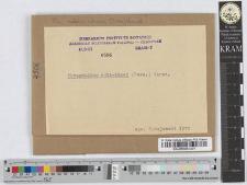 Phragmidium Rubi-Idaei /Pers/ Wint