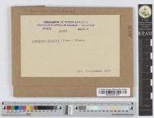 Uromyces dianthi (Pers.) Niessl