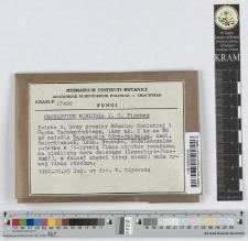 Cronartium ribicola J. C. Fischer