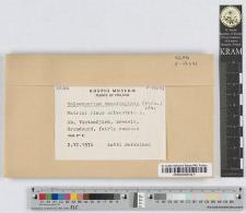 Coleosporium tussilaginis (Pers.) Lév.
