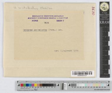 Uromyces scutellatus (Schrank) Lév.