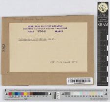 Thekopsora myrtillina (Karsten)