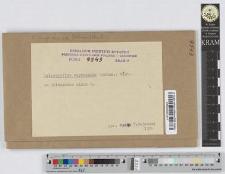 Coleosporium euphrasiae (Schum.) Wint.